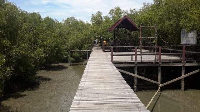 Walk through mangroves at LERD center