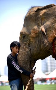 the_kings_cup_mahout_and_elepehant